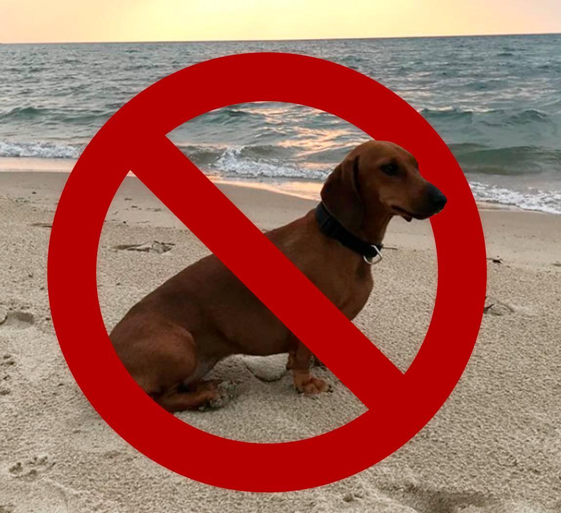 Потенциально опасные породы собак в россии: список