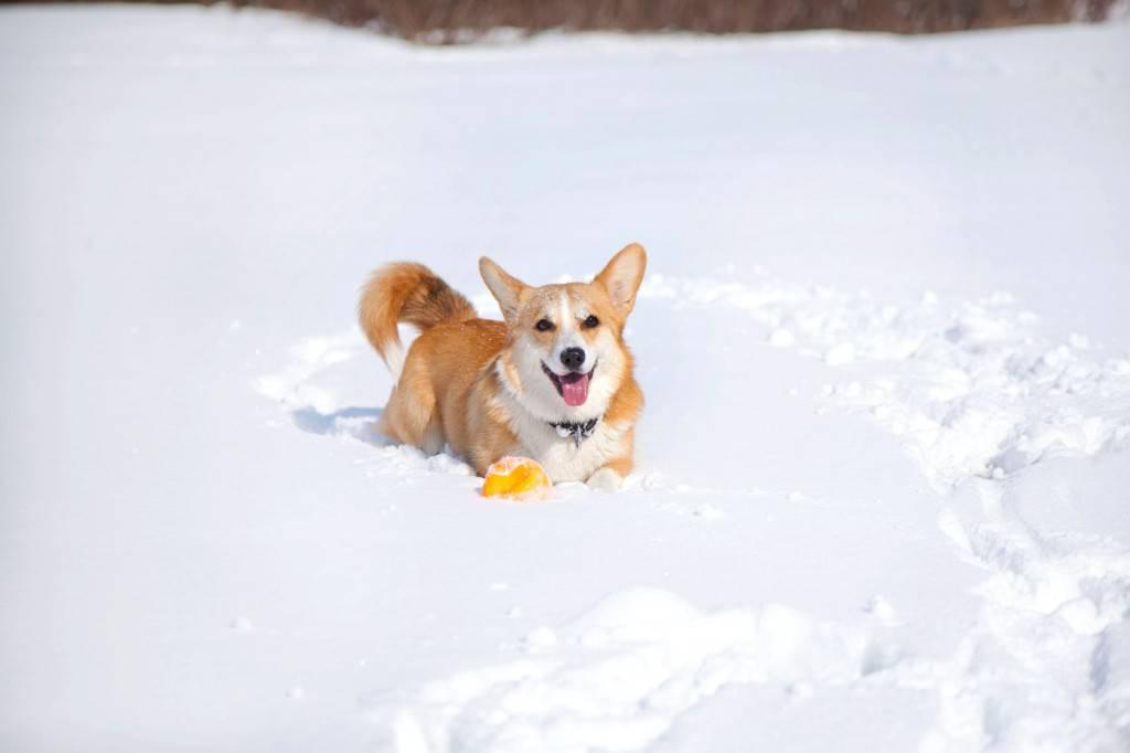 10 пород собак, которым не нужно много места