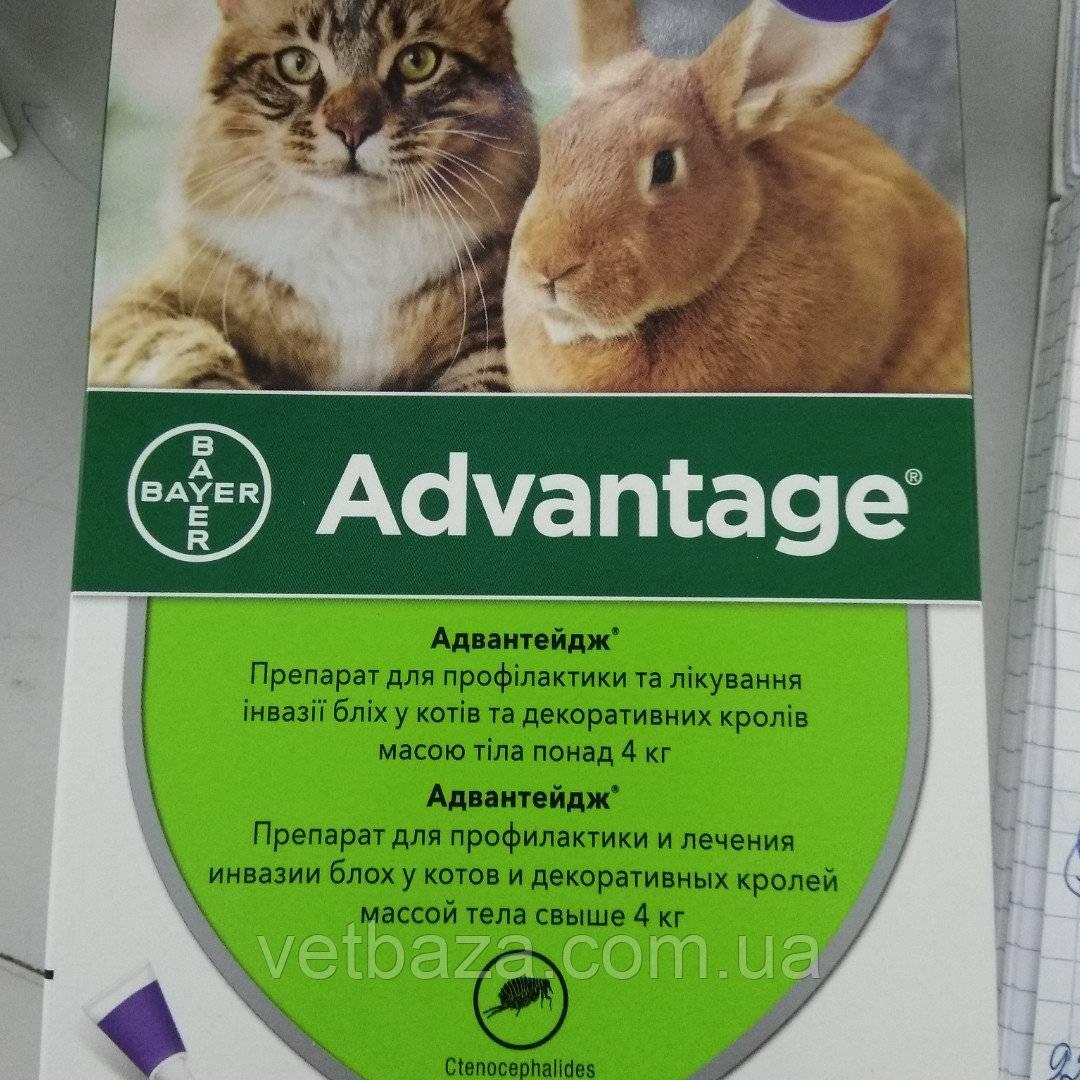 Спрей от блох для кошек – использование популярных аэрозольных средств