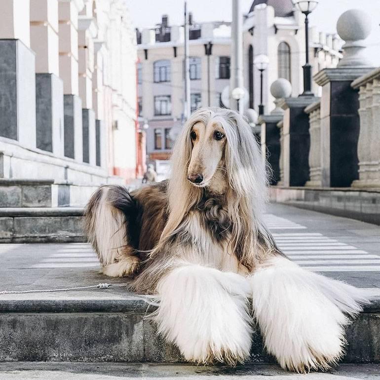 Топ-10 самых красивых собак во всем мире: названия пород с описанием и фото