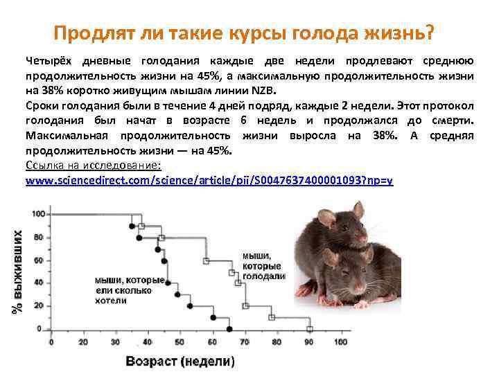 Домовая мышь — википедия