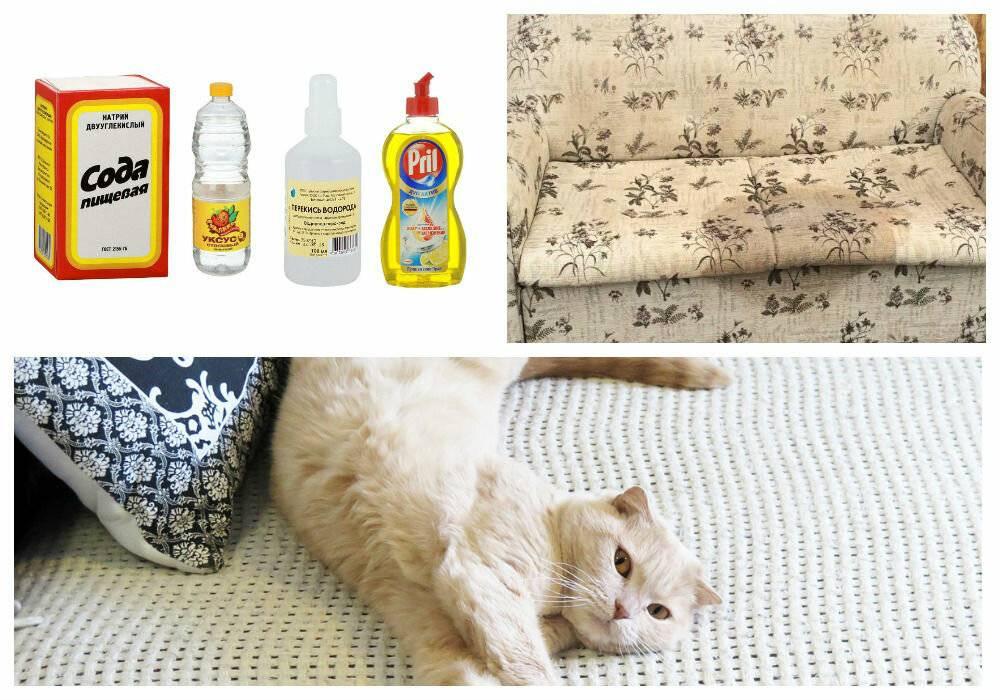 Как убрать запах кошачьей мочи с одежды, мебели и обуви