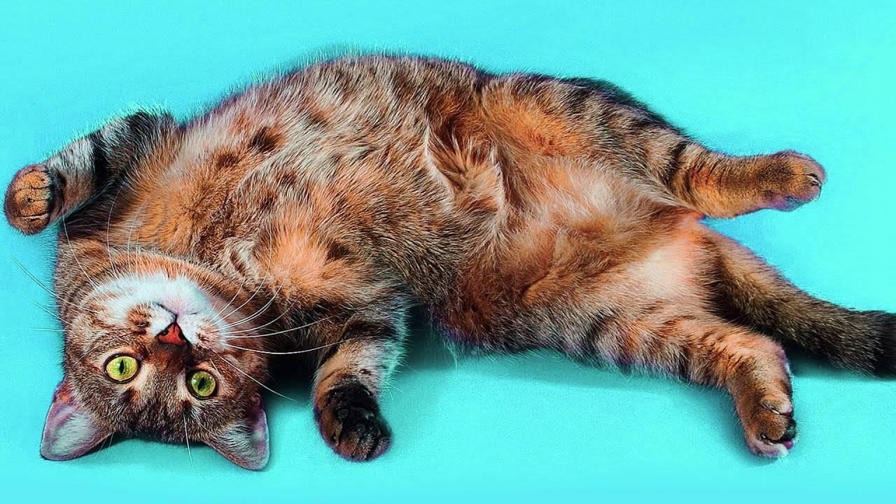 Почему кот спит на человеке: что означают его позы и выбранное место. | в тренде