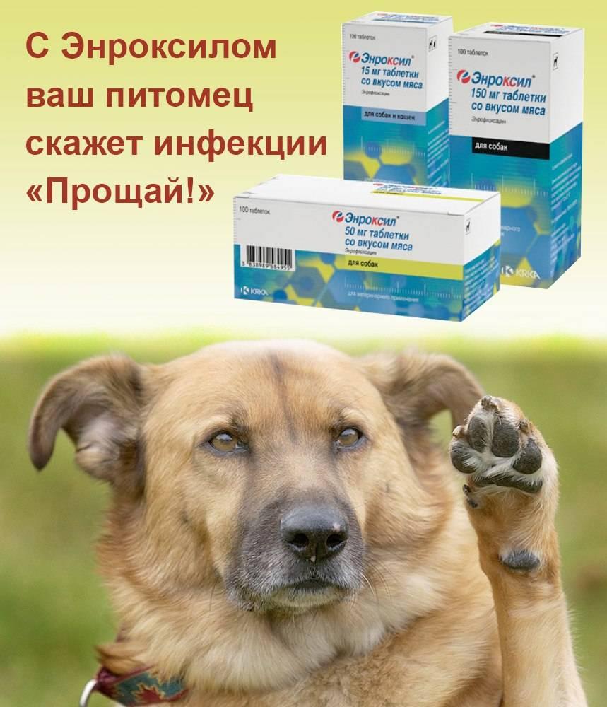 Ветеринарный препарат | энроксил 10% раствор для инъекций от krka