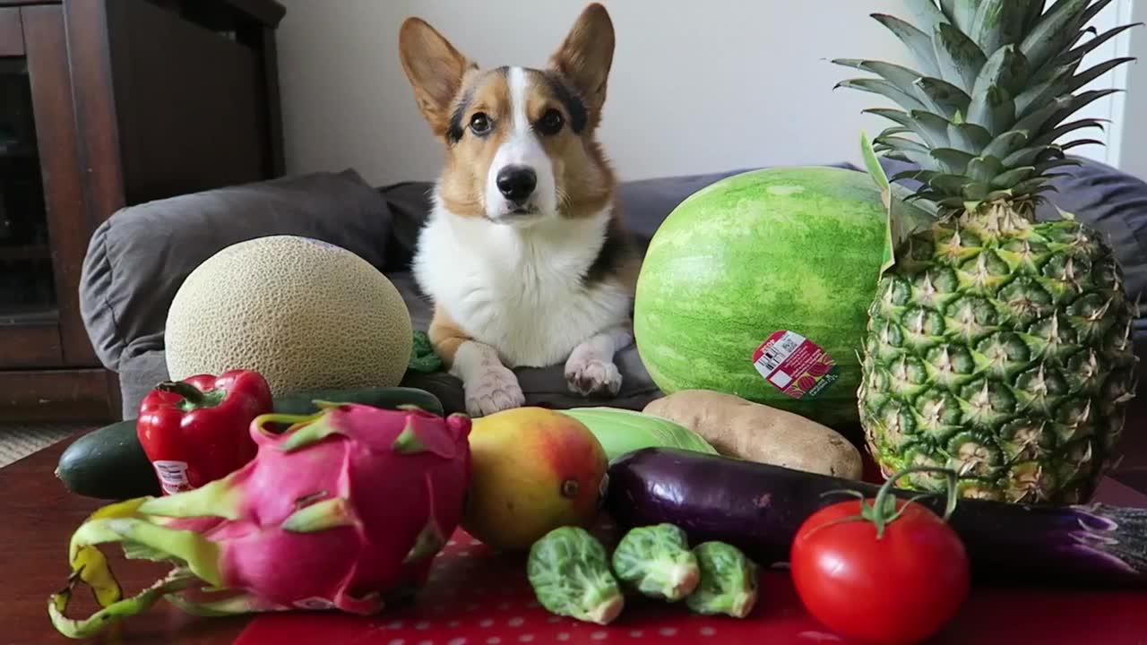 """Овощи в рационе собаки   блог ветклиники """"беланта"""""""