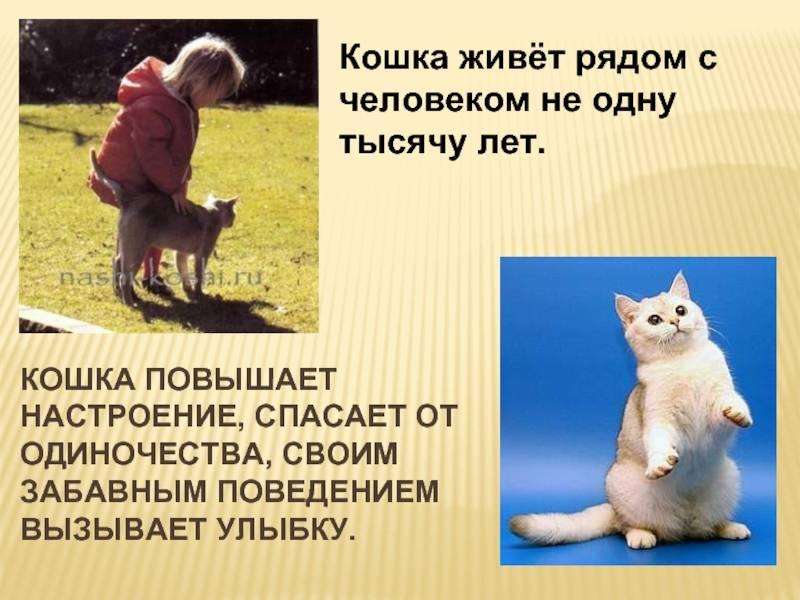 Как быстро отдать котенка в хорошие руки и пристроить, если никто не берет