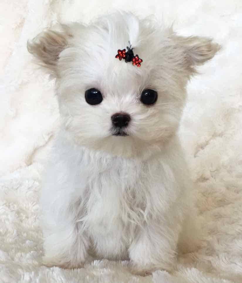 Маленькие породы собак: описания лучших с фото