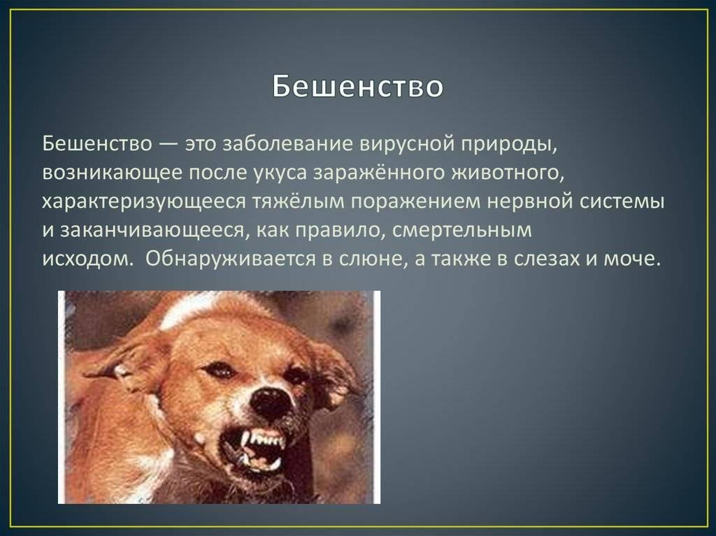 Основные признаки бешенства у собак и как его определить