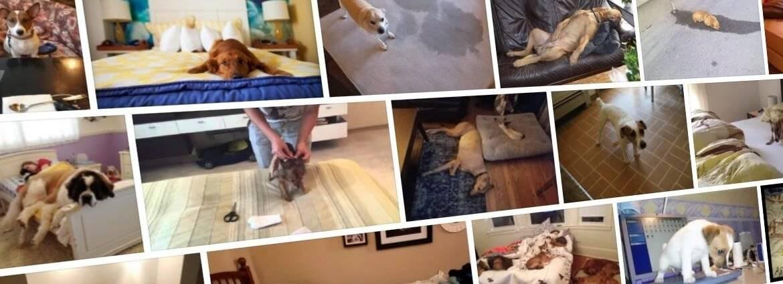 Что делать если собака гадит на кровать?