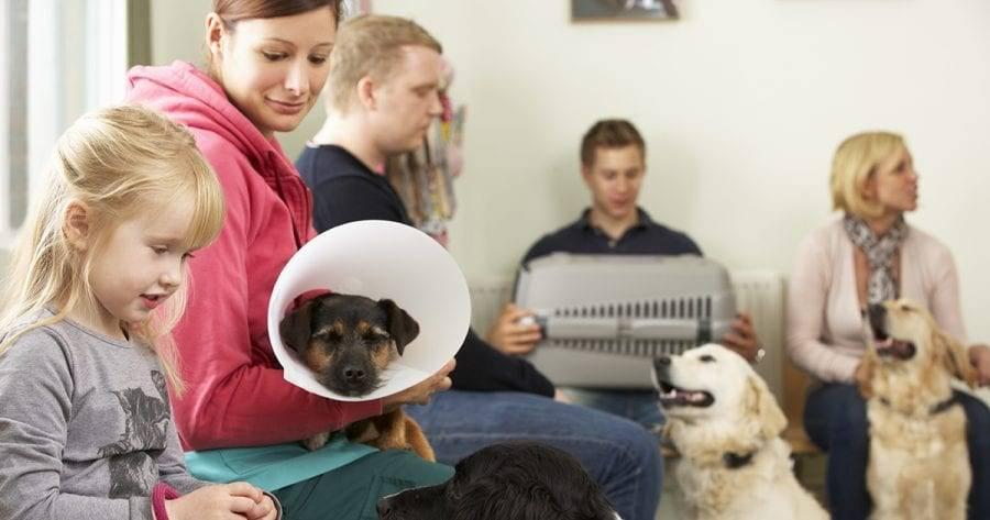 Ветеринары рассказали, как защитить питомца от перегрева во время путешествий ► последние новости