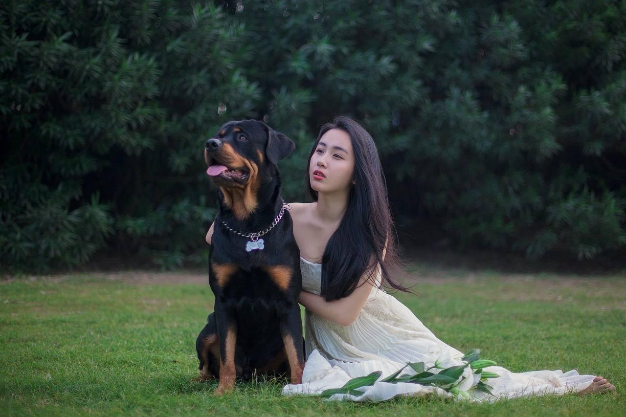Самые умные породы собак — топ 10 с фото и названиями   «дай лапу»