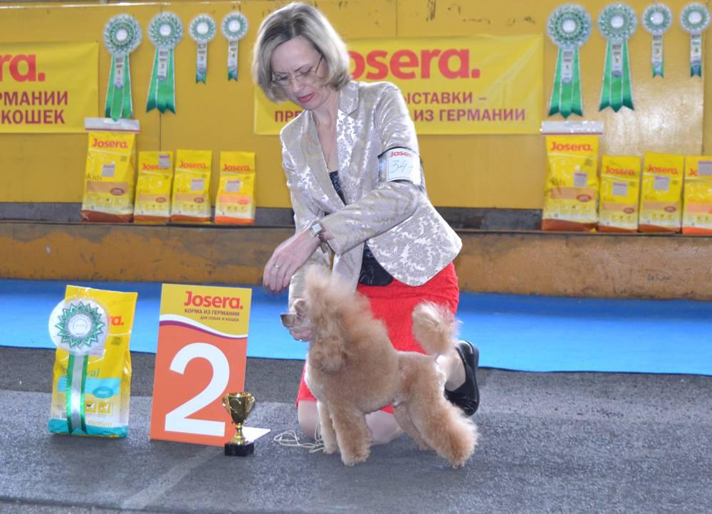 Ииц зоокурьер / выставка - от щенка до чемпиона