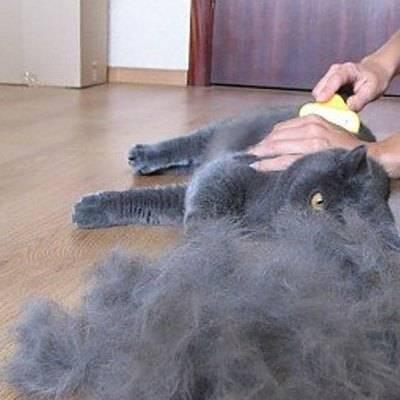 Повышенная линька у кошки - ветеринарная клиника нефрологии веравет. ветеринар на дом