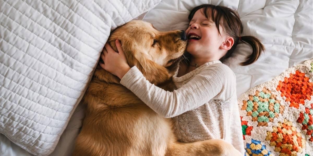 Лучшие породы собак для детей — названия, фото, описания