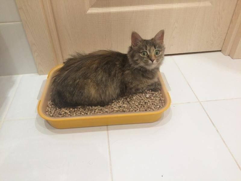 Кошка перестала ходить в лоток. что делать?