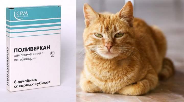 Поливеркан для котов: инструкция по применению. дозировка.