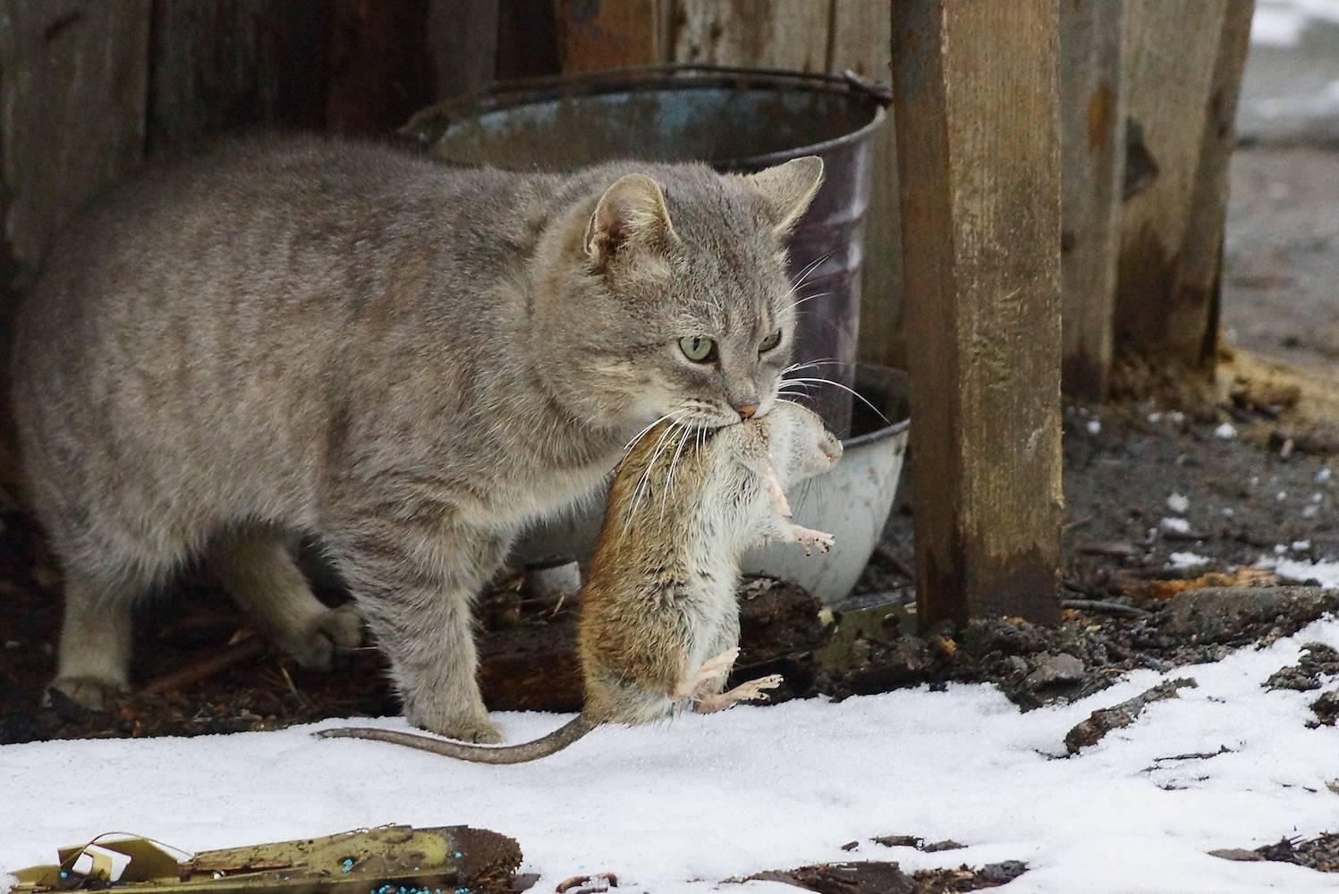 Как поймать и приручить дикого котёнка, кота или кошку