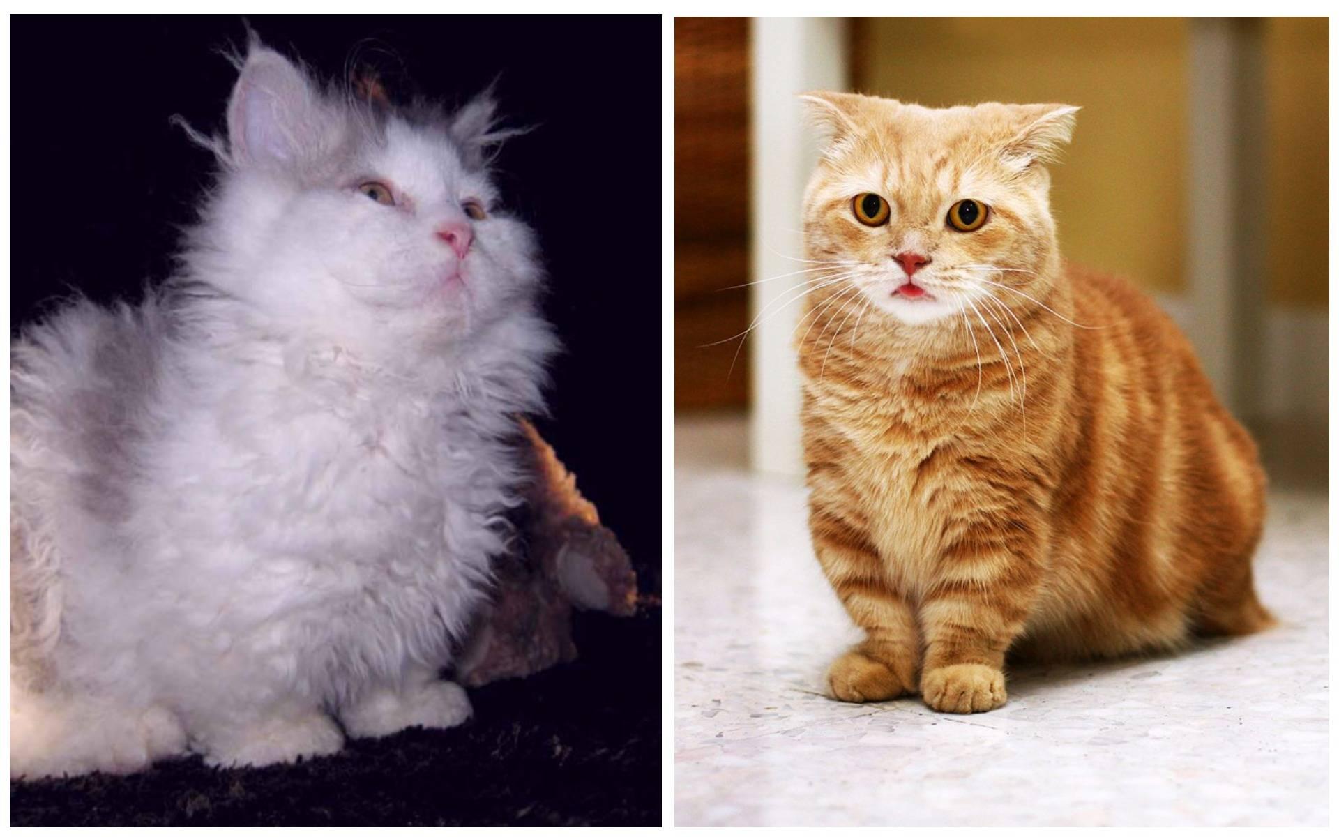 ᐉ самые маленькие кошки - ➡ motildazoo.ru