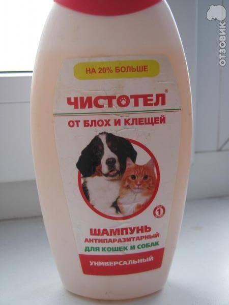 Чем помыть кошку если нет специального шампуня: какие средства можно применять в домашних условиях что бы искупать питомца