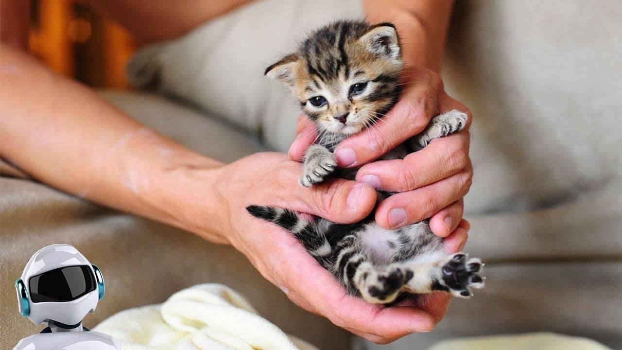 Самые маленькие породы кошек - все о породах кошек с описанием, фотографиями и названиями.все о породах кошек с описанием, фотографиями и названиями.