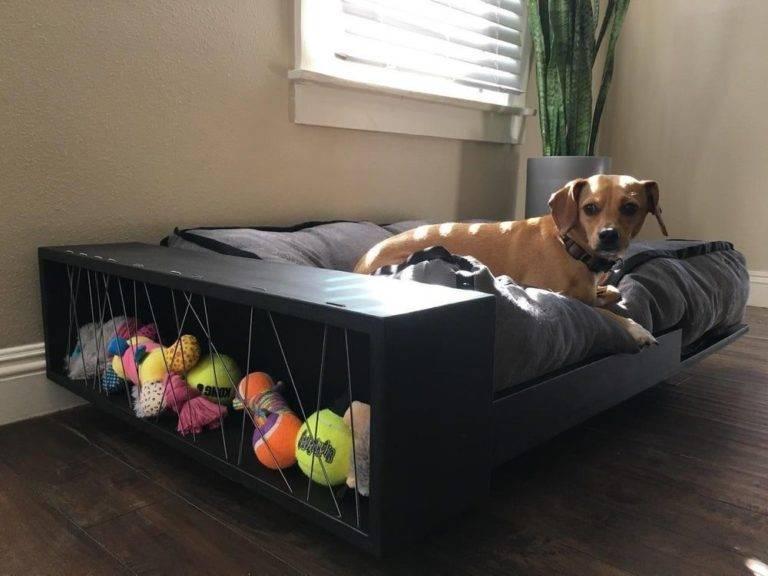 Как не подпускать собаку к мебели?