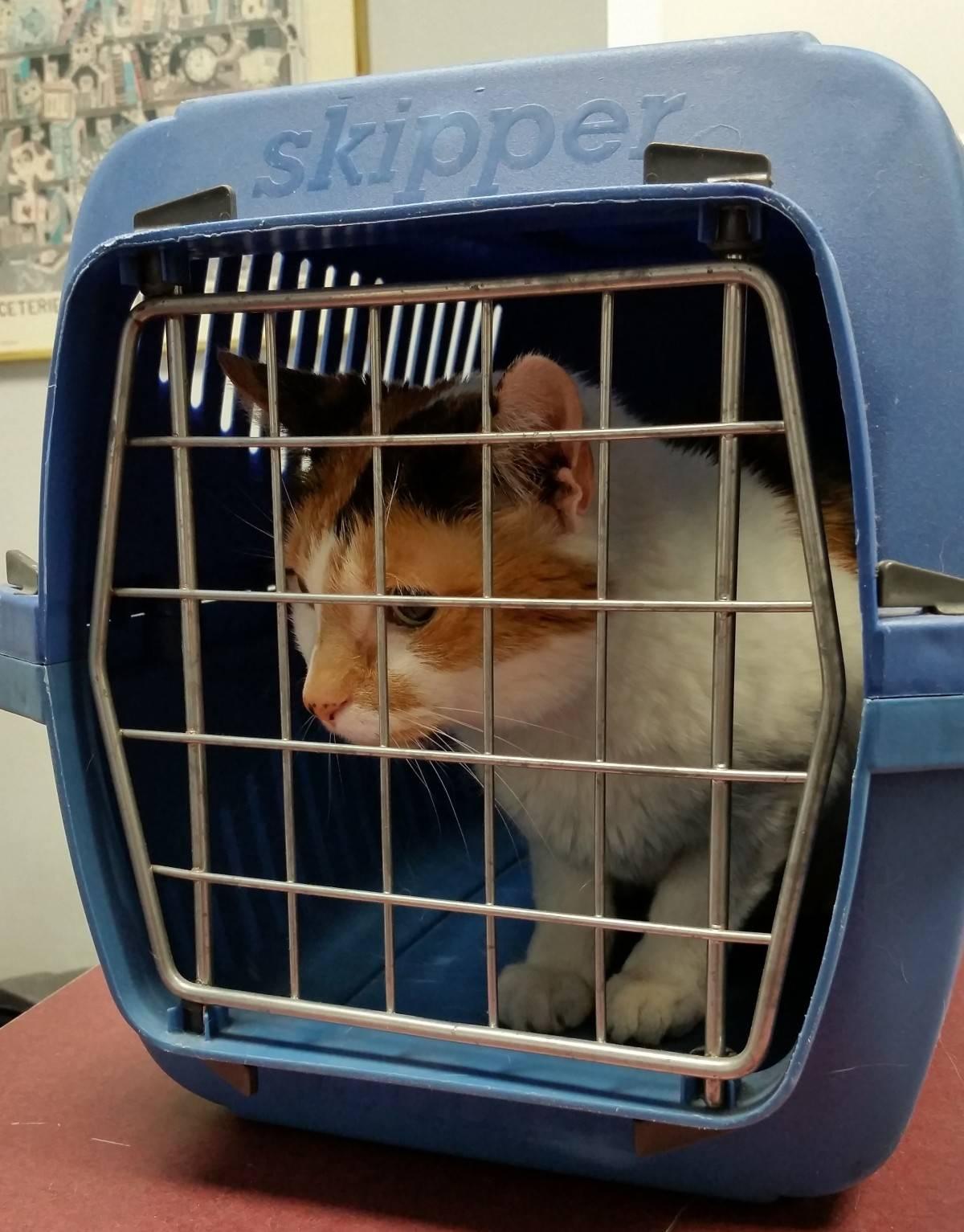 Как перевозить кота в машине на дальние расстояния
