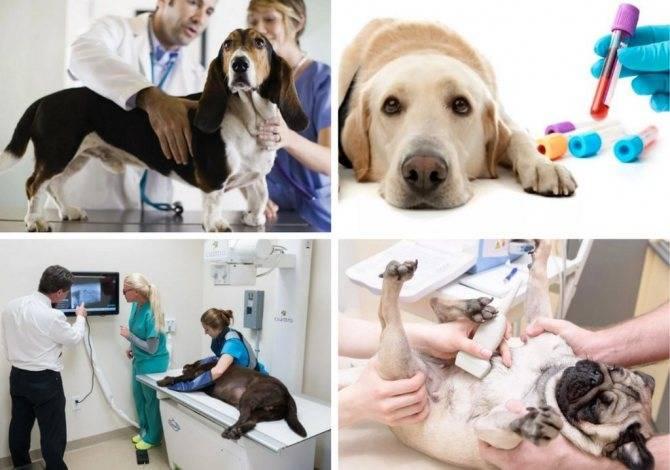 Круглосуточная ветеринарная клиника в подольске. вирусный энтерит у собак - симптомы и лечение