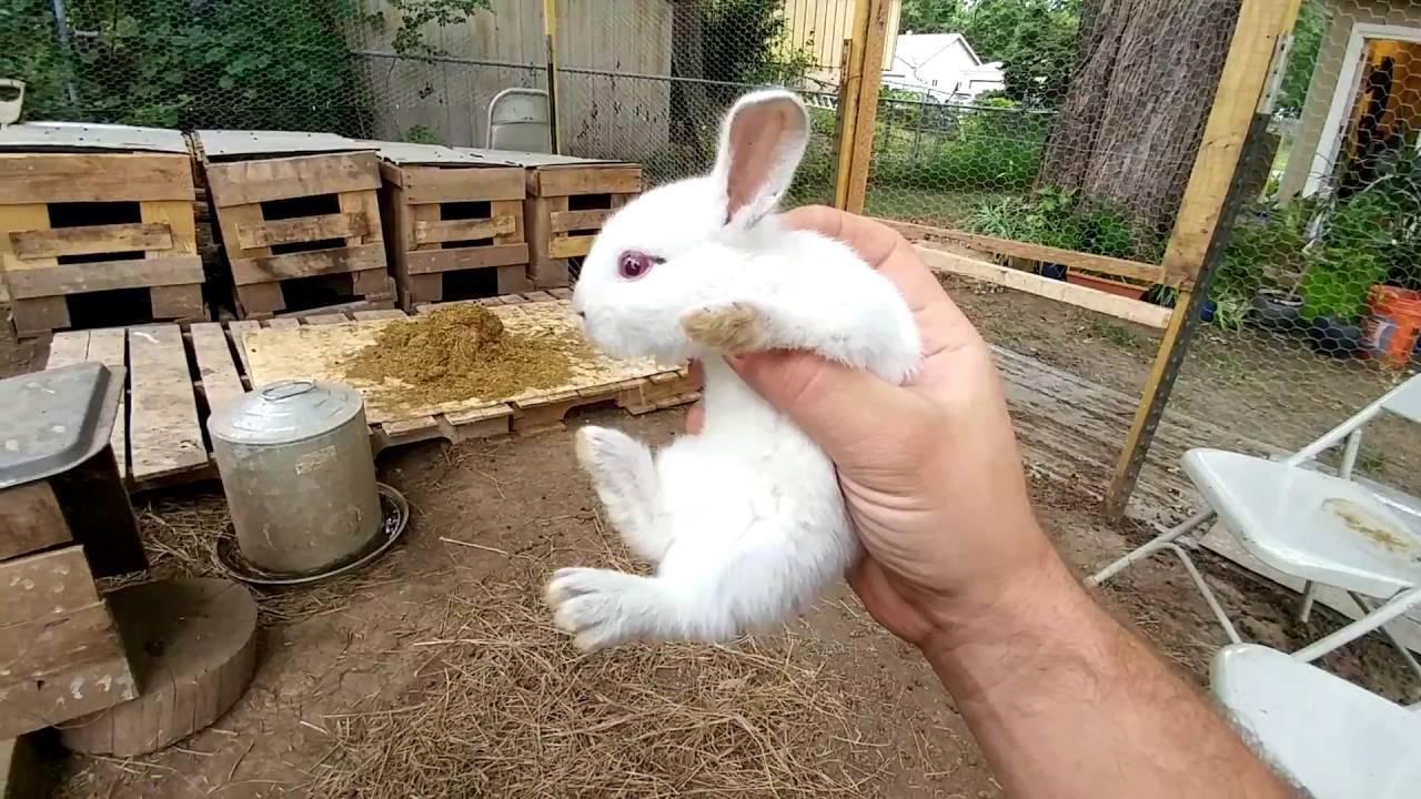Разведение кроликов в домашних условиях для начинающих - как начать выращивать с нуля