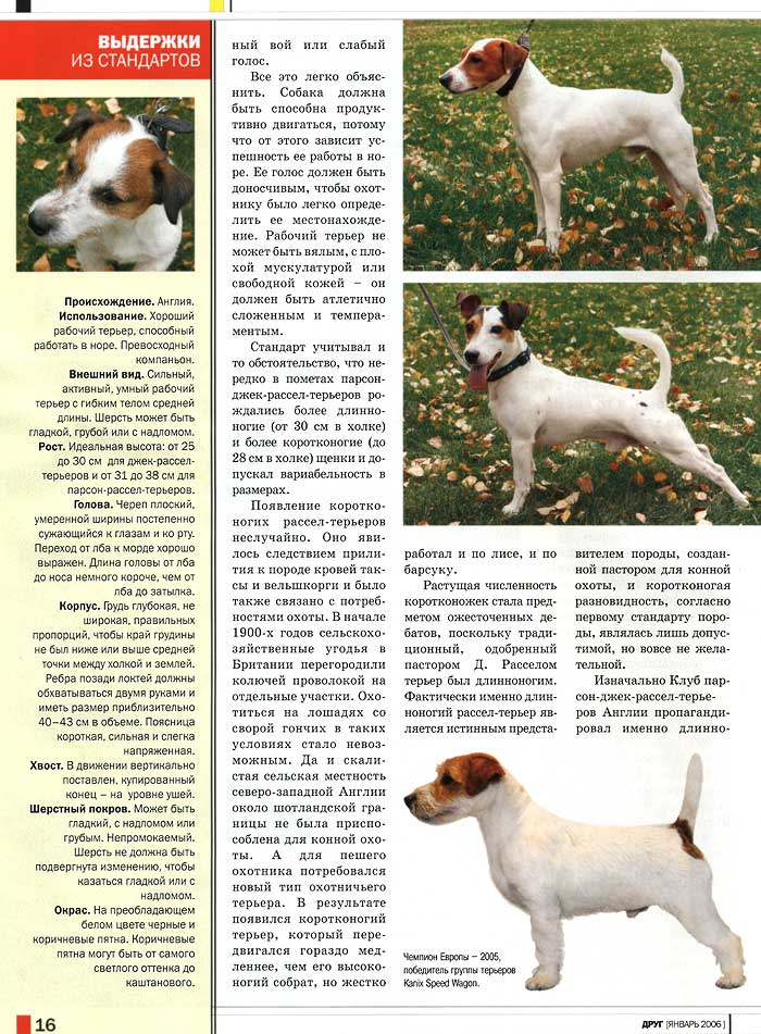Описание, фото и характеристики охотничьей собаки породы джек рассел терьер