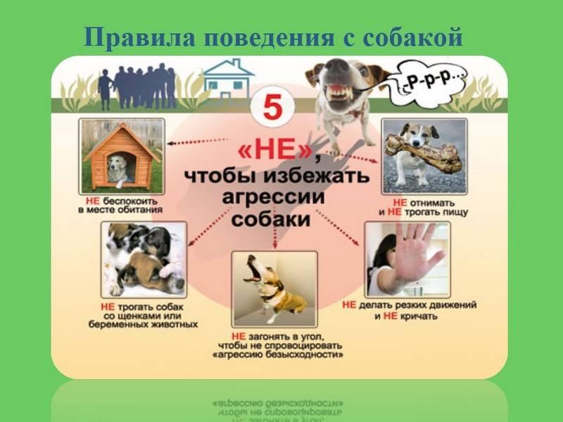 Что нужно знать, беря для детей собаку в приюте?