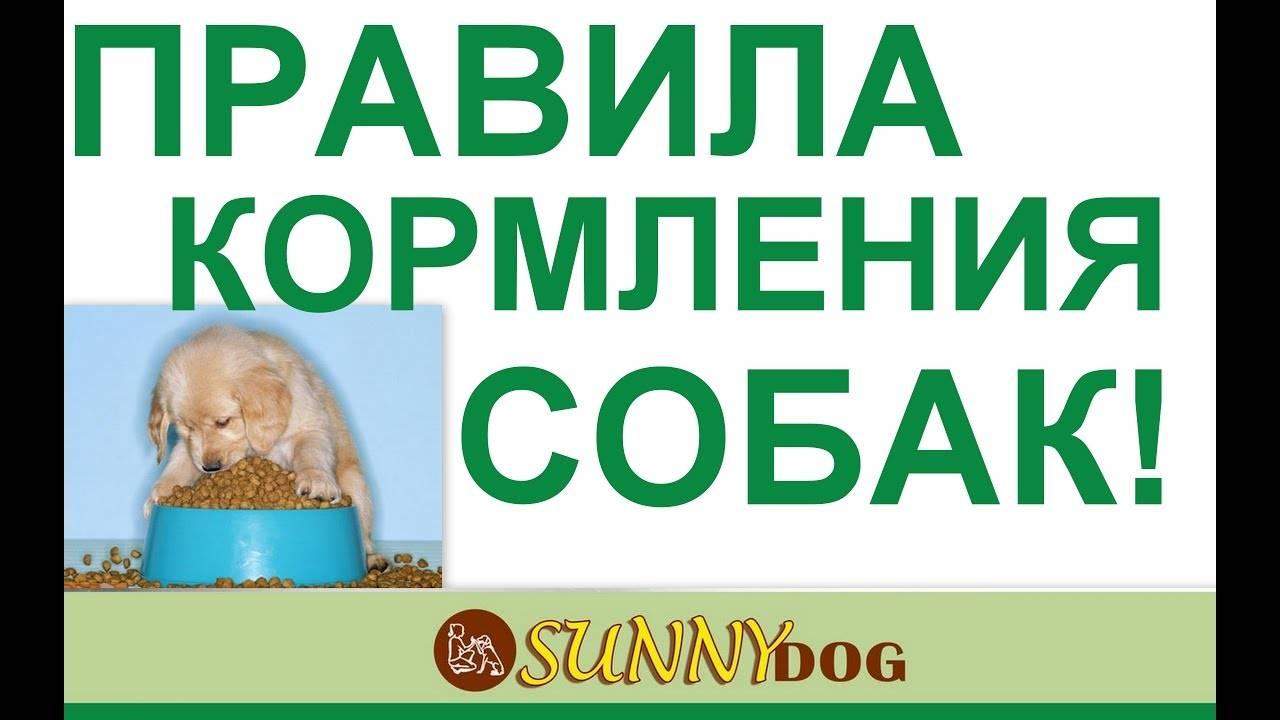 Когда нужно кормить собаку (до или после прогулки)