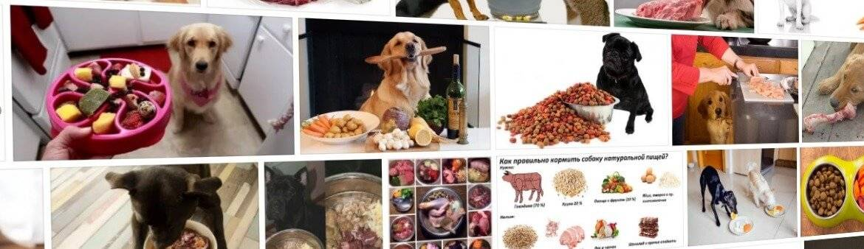 Рацион собаки: как правильно кормить сухим кормом