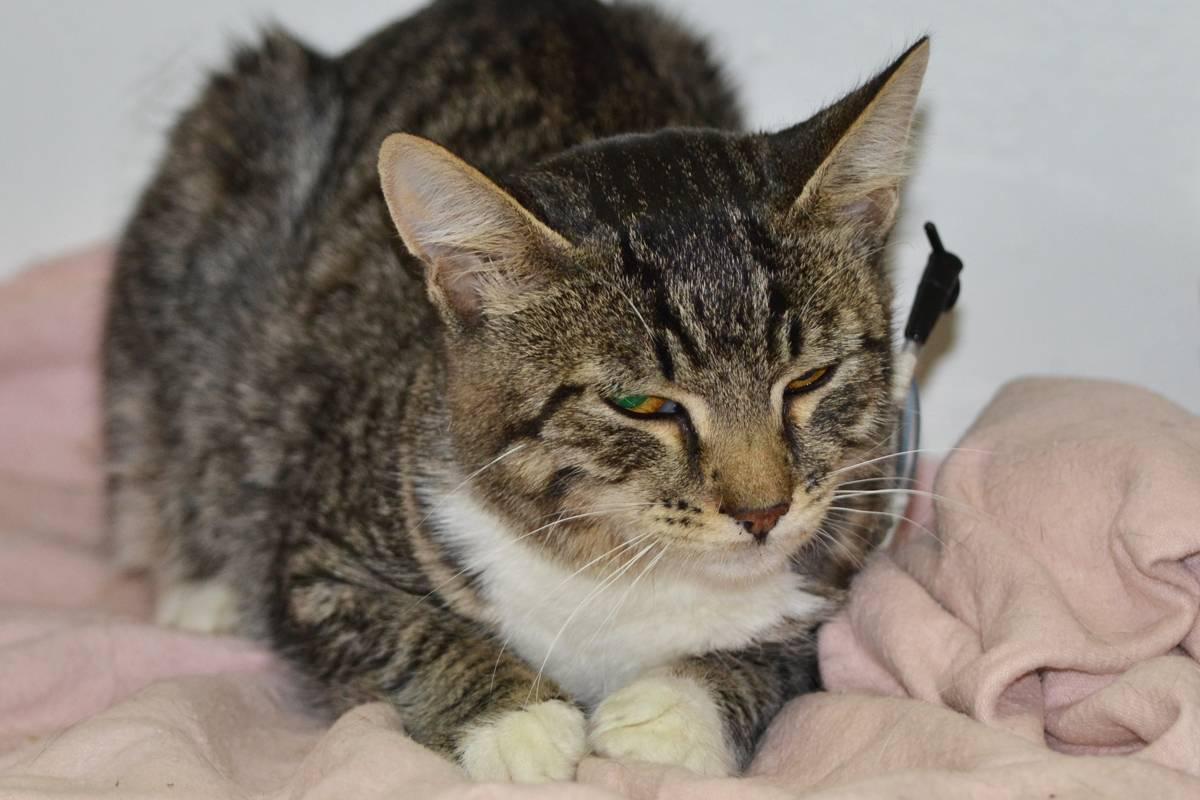 Котёнок не ест: причины и необходимые меры