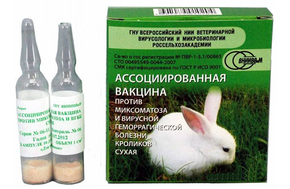 Ассоциированная вакцина для кроликов: виды, инструкция и дозировка