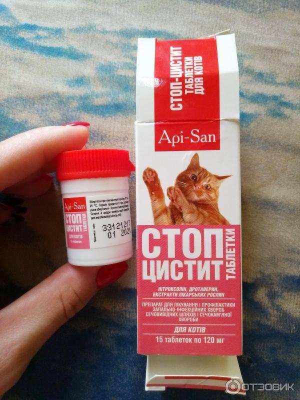 Цистит у котов и кошек, диагностика, лечение