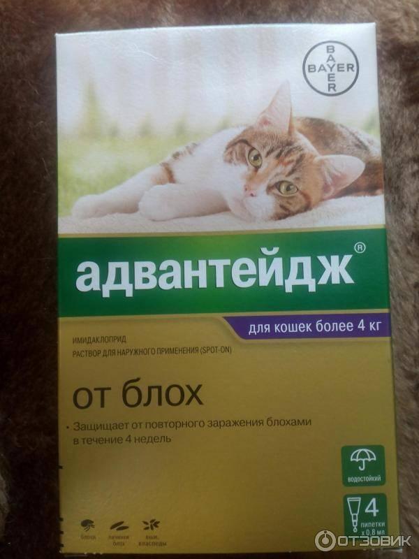 Адвантейдж для кошек: инструкция и показания к применению, отзывы, цена