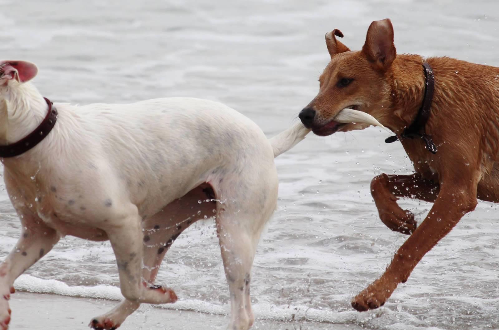 Собака гоняется за хвостом. баловство или тревожный симптом