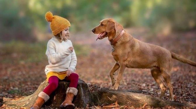 Собаки для детей: 20 лучших пород для ребенка