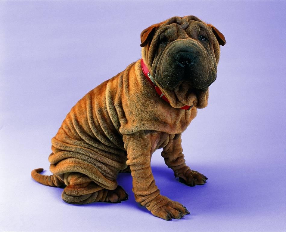 Охотничьи собаки: топ-15 лучших пород с фото и названиями