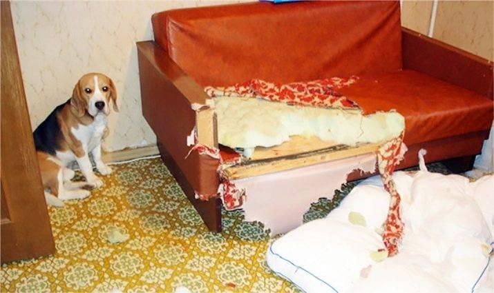 Завести собаку: 10 причин завести щенка. что делать, если целый день работаешь? что нужно узнать перед приобретением собаки?