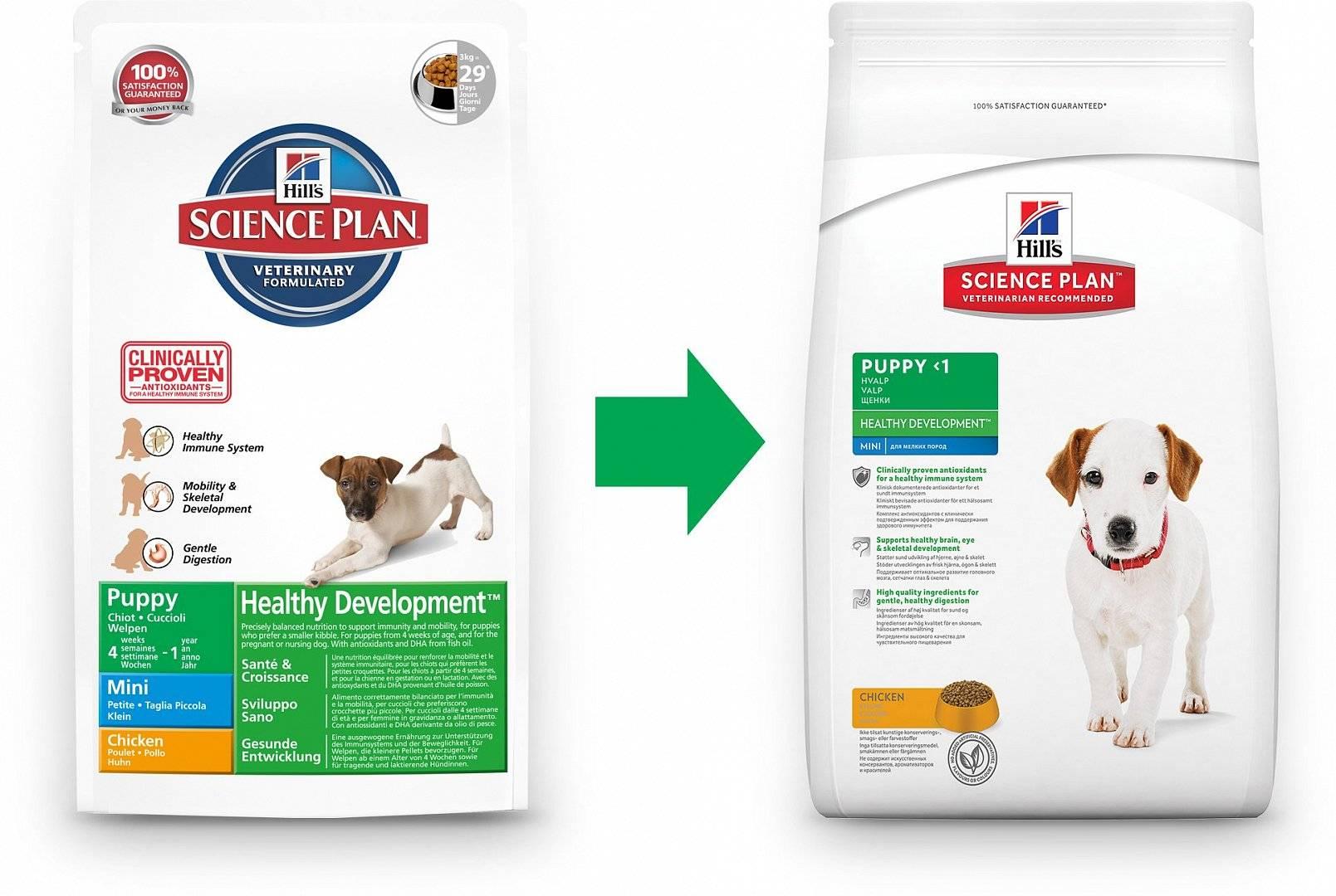 Чем кормить джек рассел терьера – щенка, взрослую собаку, в домашних условиях