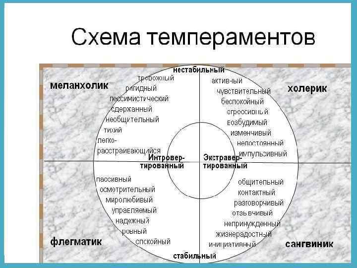 Керн терьер собака. описание, особенности, уход и цена керн терьера   sobakagav.ru