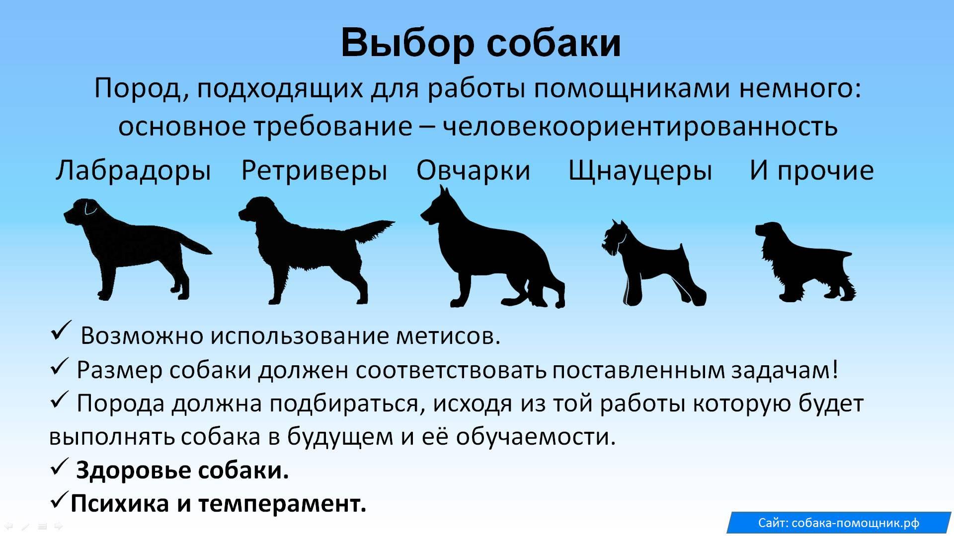 Как правильно выбрать щенка: подробная инструкция
