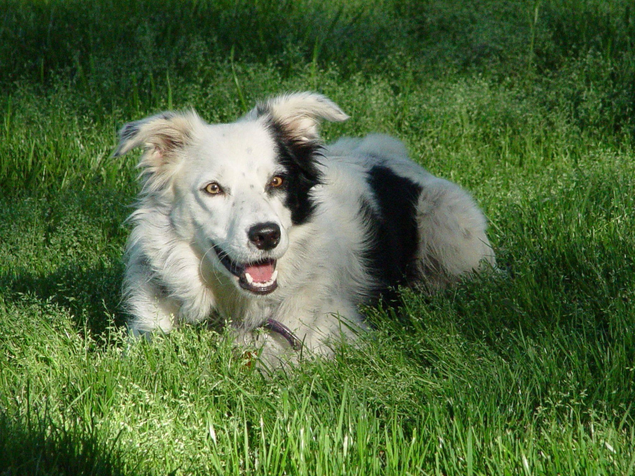 Самые умные породы собак. описание, названия, виды и фото умных пород собак