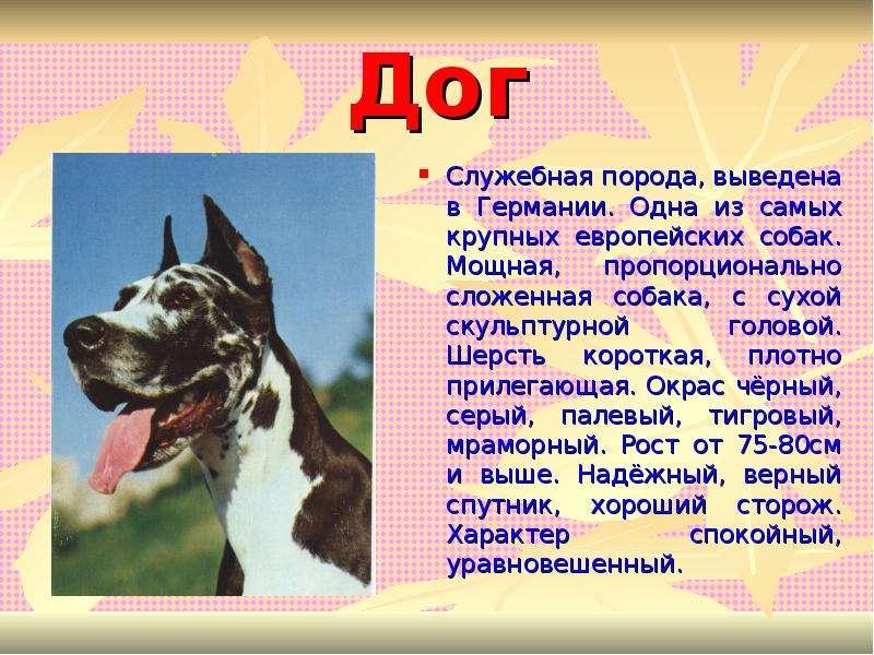 Агрессивные породы собак. описание, названия и фото самых агрессивных собак | животный мир