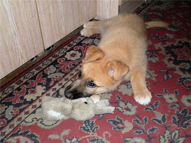 Разные породы собак: какие породы существуют, определитель пород
