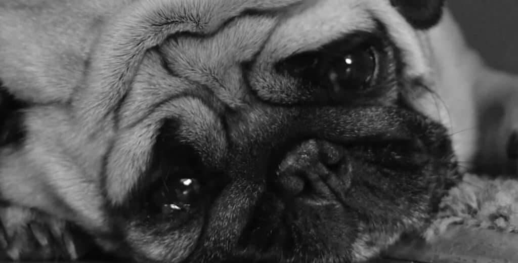 Чувствует ли собака, когда хозяину грустно?