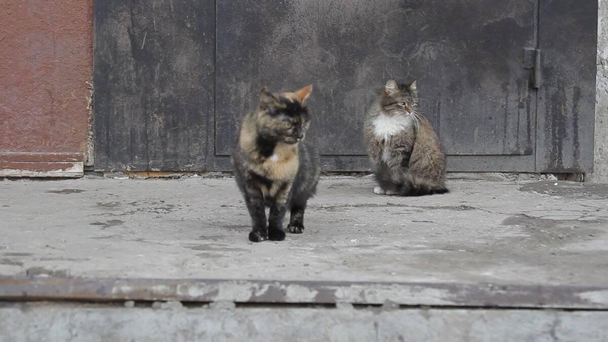 Домашняя кошка:  описание, история, кормление и приручение