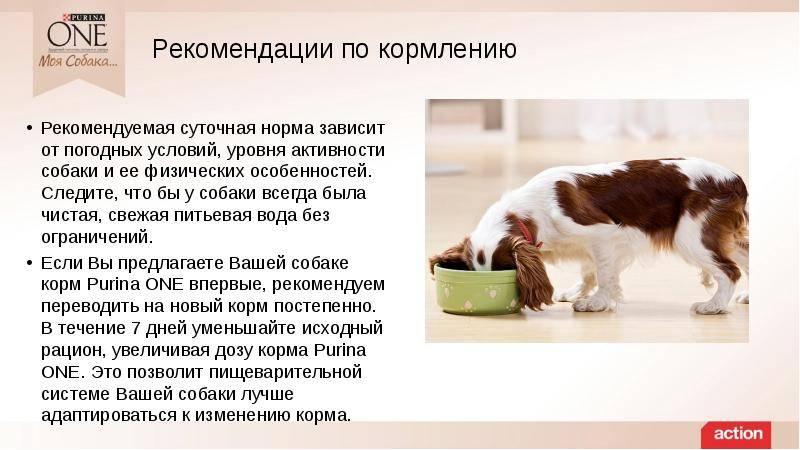 Как перевести собаку на сухой корм?