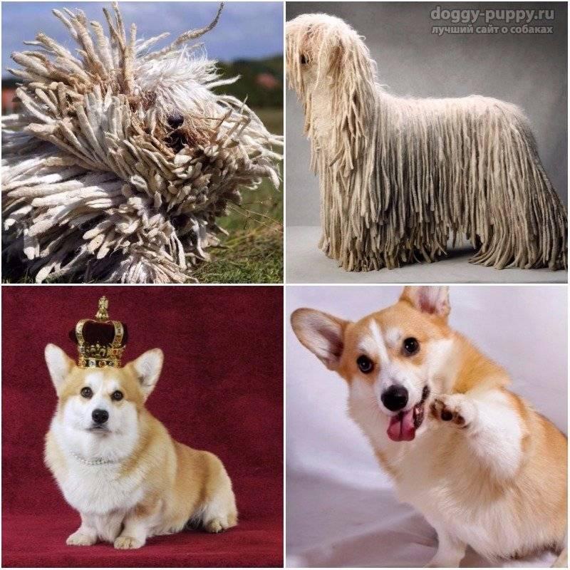 Лучшие породы собак: топ самых интересных видов